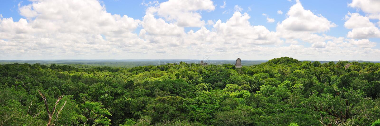 tikal guatemala rainforest royaltyfria bilder