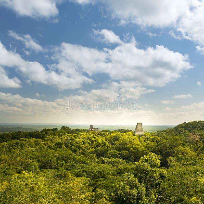 Tikal Mayan Guatemala fördärvar royaltyfri bild