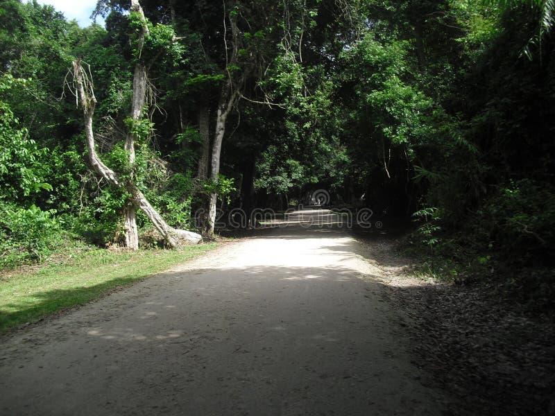 Tikal, Peten, Guatemala, Amérique Centrale 22 photos stock