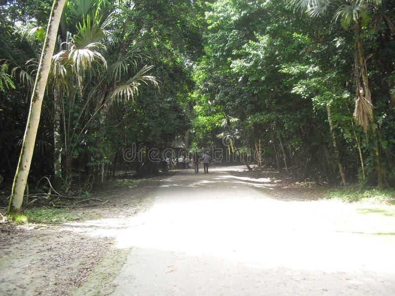 Tikal, Peten, Guatemala, Amérique Centrale 21 photo libre de droits