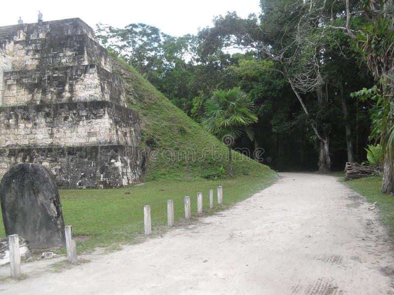 Tikal, Peten, Guatemala, Amérique Centrale 18 image libre de droits
