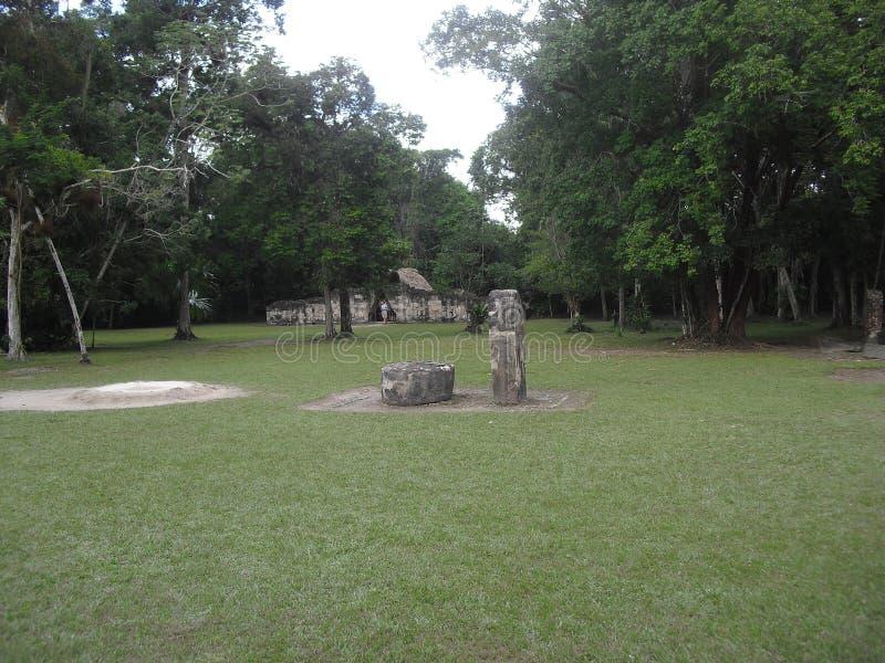 Tikal, Peten, Guatemala, Amérique Centrale 19 image stock