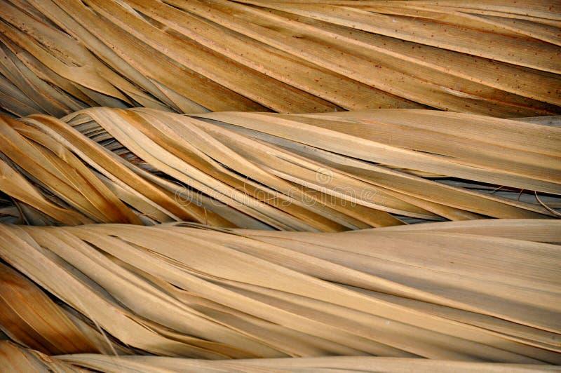 Tiki屋顶结构特写镜头 免版税库存图片