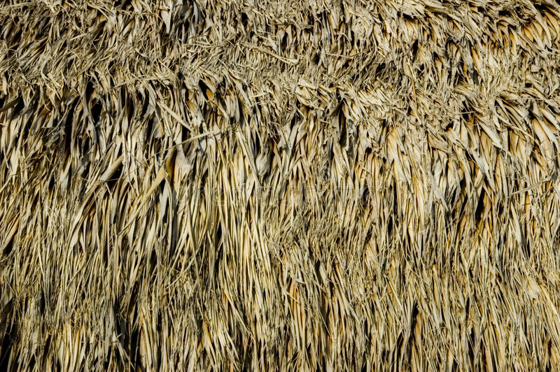 Tiki hut detail. A detail of the palm thatch roof of a beach side tiki hut royalty free stock photography