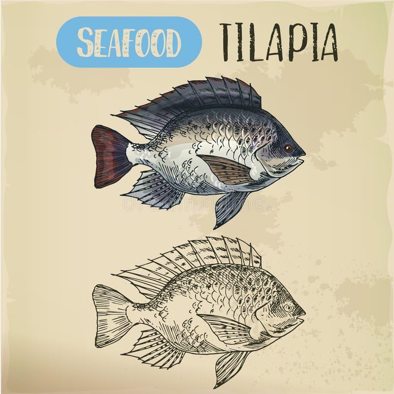 Tilapia of cichlid vissenschets voor restaurantmenu stock illustratie