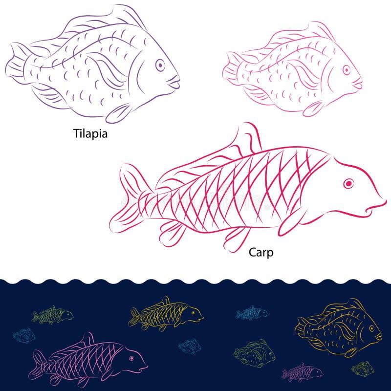 Tilapia en van de Karper de Reeks van Vissen royalty-vrije illustratie