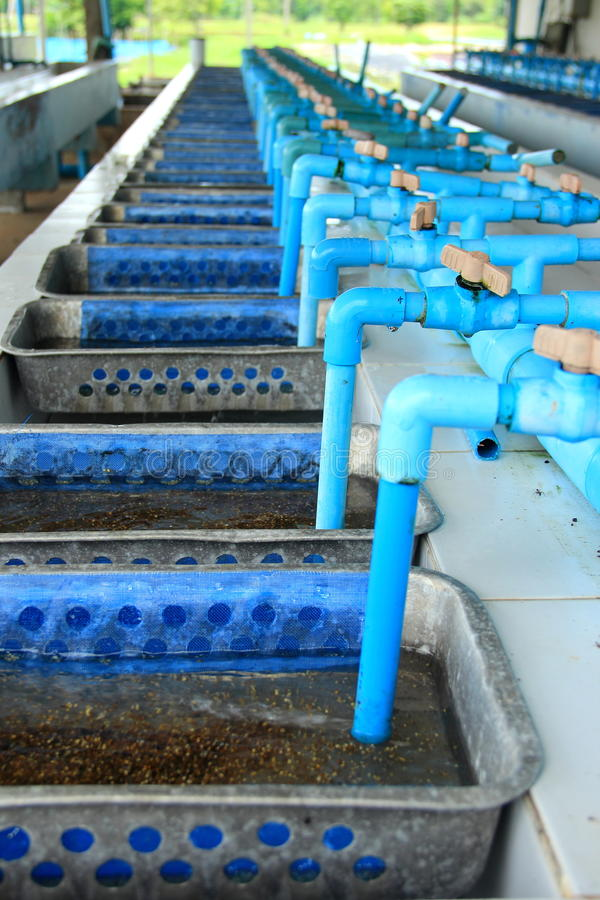 Tilapia hatchery equipment royalty free stock photography