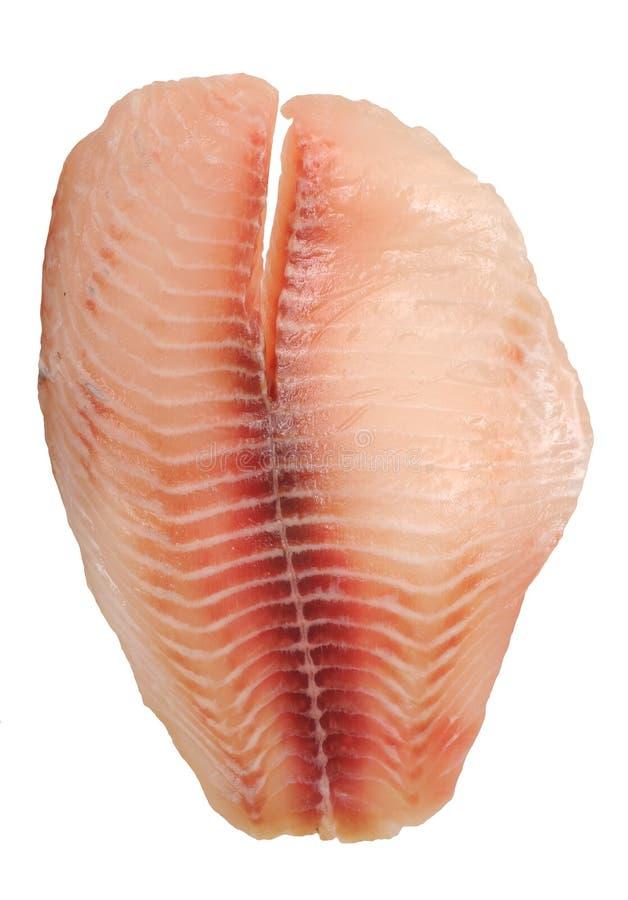 Tilapia polędwicowa ryba fotografia royalty free