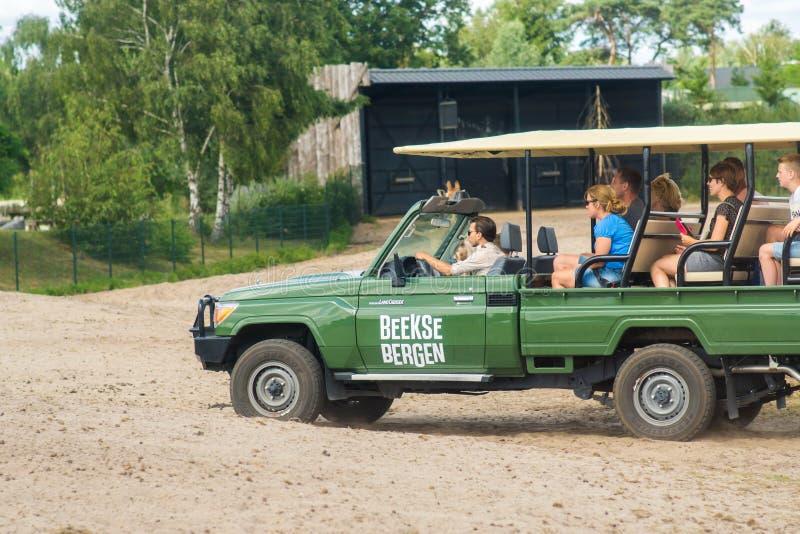 Tilburg, Países Baixos 07 01 2019: Safari do carro durante passar o tempo em Beekse Bergen Safari Park i Tilburg imagens de stock