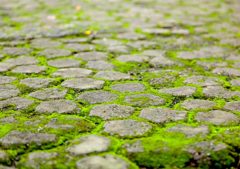 Tile overgrown with bright green moss, abstract background and t stock photo