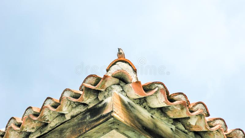 Tile roofs with bird. A Tile roofs with bird royalty free stock images