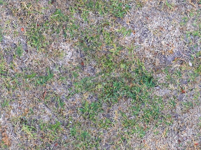 Tileable-Gras stockfotos