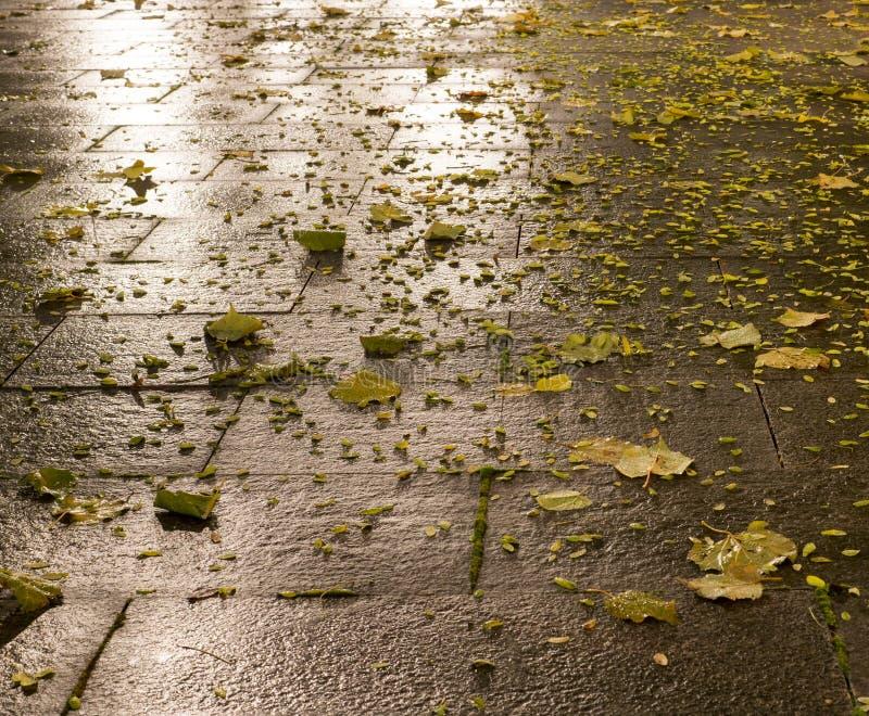 Tiled park ground at autumn night. background. Wet tiled park ground at autumn night. background royalty free stock photos