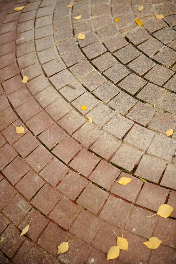 Tiled Pavement with Fallen Autumn Leaves. A tiled pavement with yellow fallen autumn leaves stock images