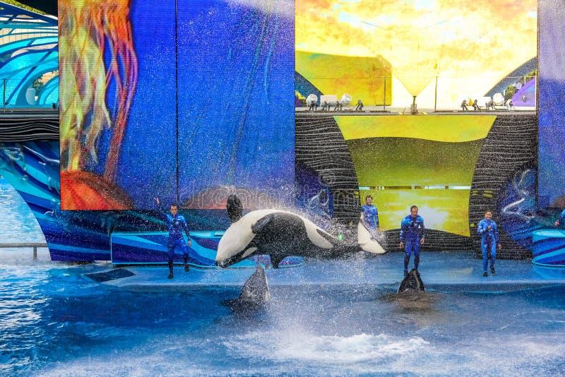 Tilikum Seaworld Орландо стоковое фото
