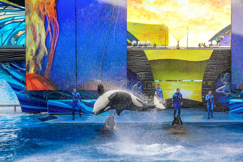 Tilikum Seaworld Orlando stock foto