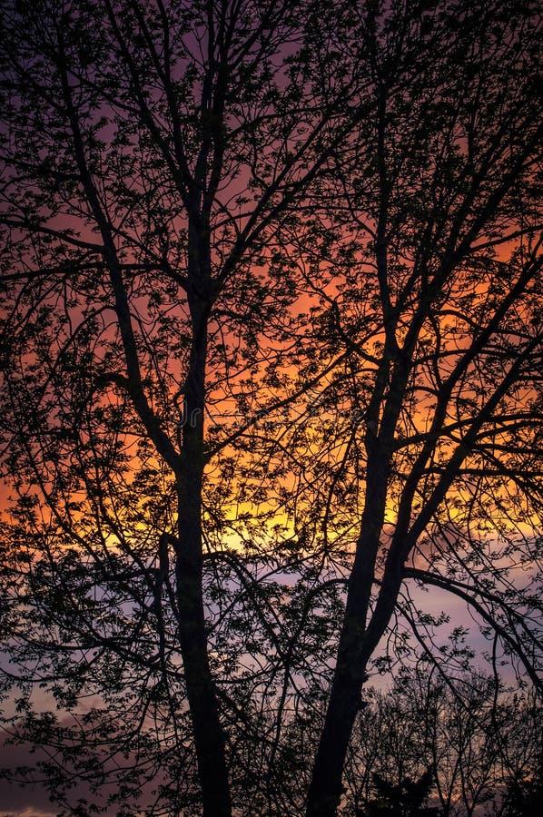 Till och med trädet fotografering för bildbyråer