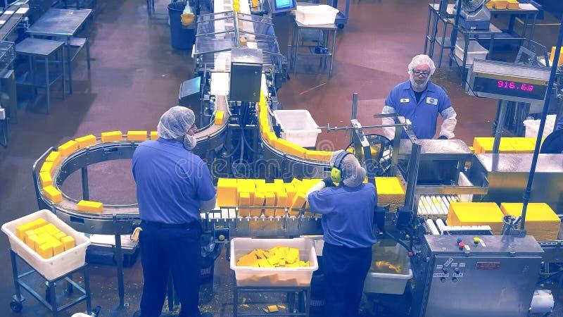 TILLAMOOK, OREGON, LOS E.E.U.U. - 1 DE SEPTIEMBRE DE 2015: los trabajadores supervisan el corte de bloques grandes de queso imagen de archivo libre de regalías