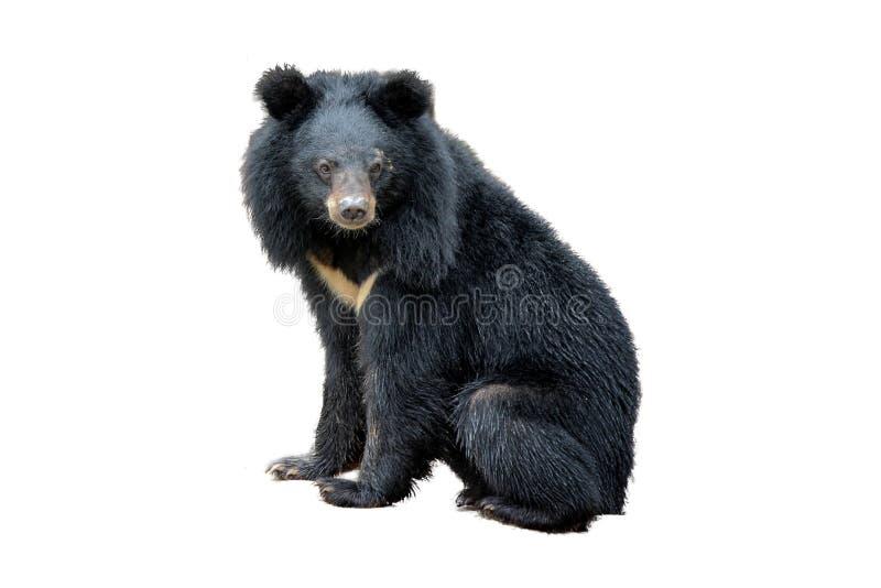 Tillbaka björn arkivbild