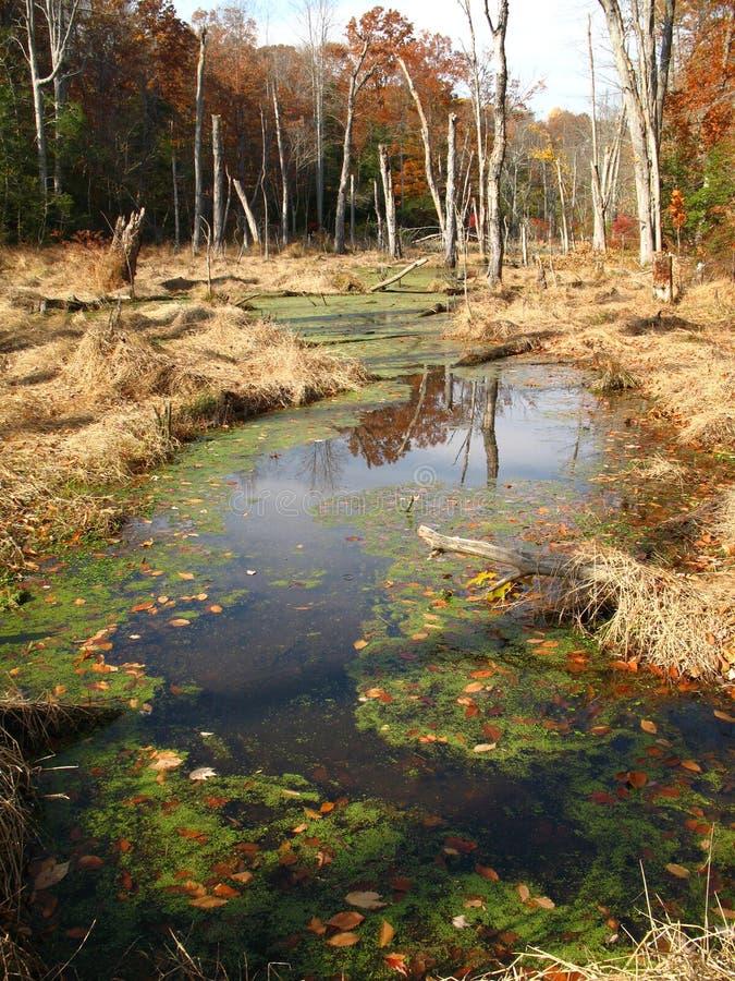 tillbaka fjärdvåtmark arkivfoto