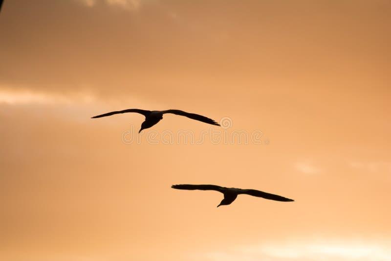 tillbaka flyg fotografering för bildbyråer