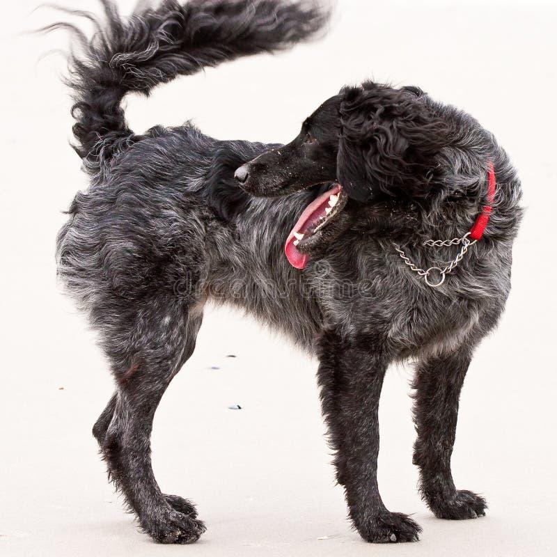 tillbaka hund som ser ung royaltyfri fotografi