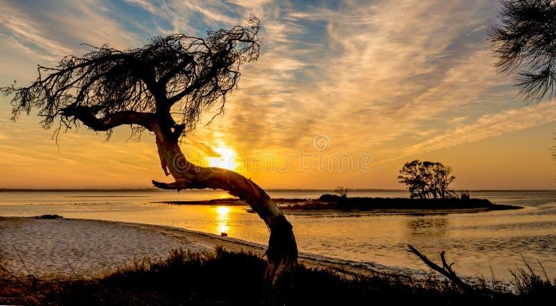 Tillbaka Litträd med soluppgång över punktön arkivfoto
