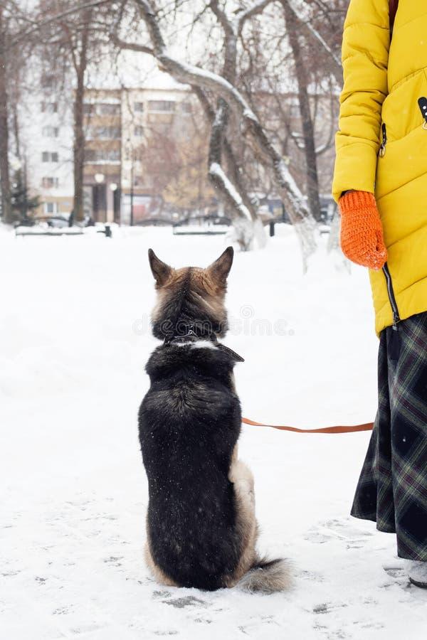 Tillbaka sikt av att sitta den bruna hunden på en snö nära till dess ägare arkivfoton