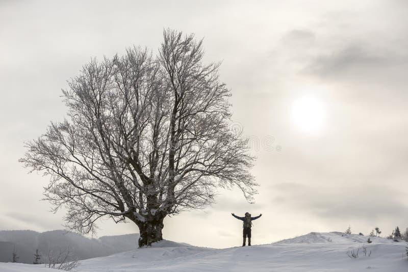 Tillbaka sikt av den turist- fotvandraren med ryggsäckanseende i vit ren djup snö på det stora trädet på bakgrund av träig berg o royaltyfri foto