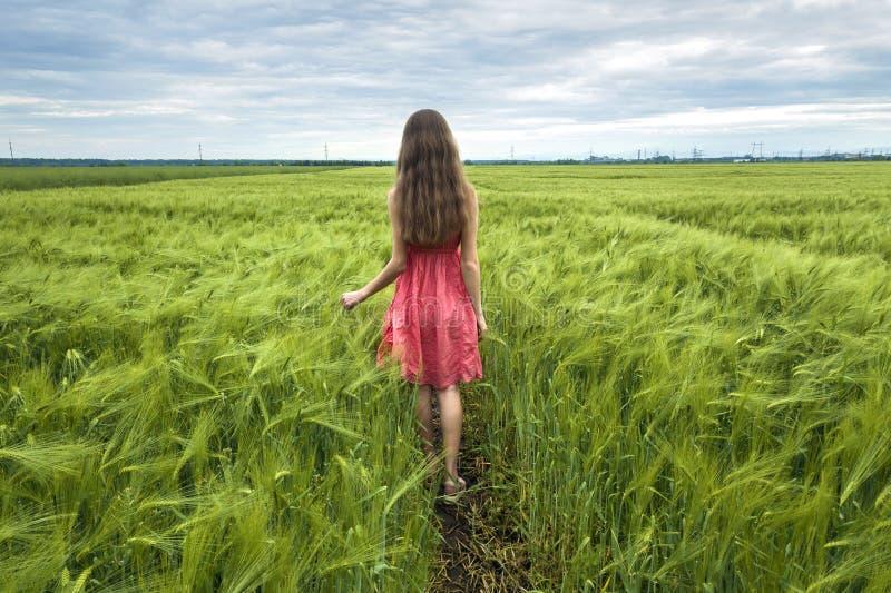 Tillbaka sikt av den unga romantiska slanka kvinnan i röd klänning med långt hår som går i grönt fält på solig sommardag på kopia royaltyfri foto