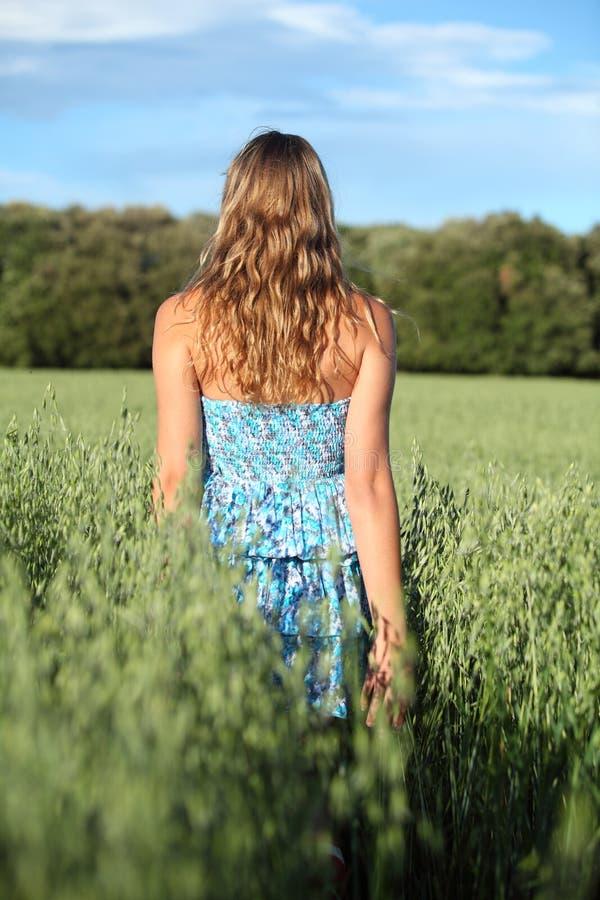 Tillbaka sikt av en kvinna som går över en havreäng royaltyfria foton