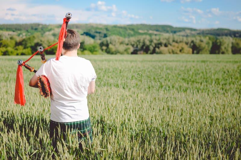 Tillbaka sikt av mannen som tycker om som spelar rör i traditionell kilt på grönt det friasommarfält fotografering för bildbyråer