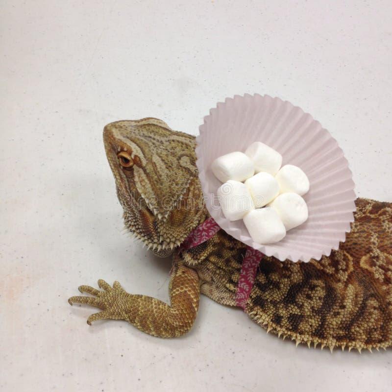 Tillbaka skäggiga Dragon Carrying Marshmallows - royaltyfri bild