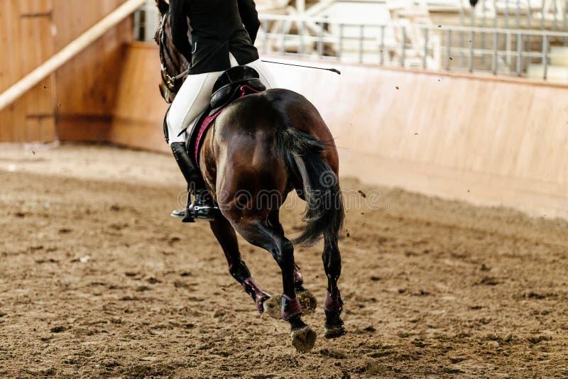 Tillbaka skicklig ryttare pÃ¥ häst fotografering för bildbyråer