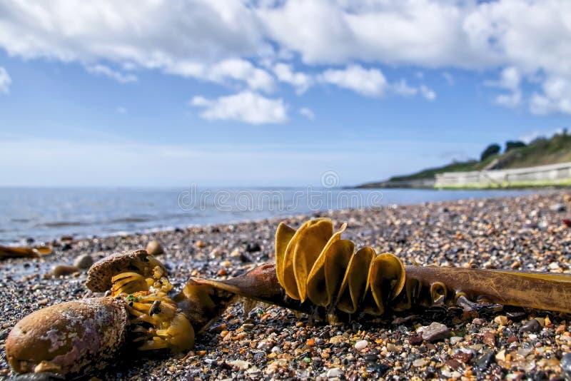 Tillbaka strand - Lyme Regis royaltyfri fotografi
