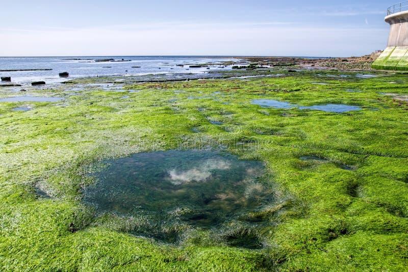 Tillbaka strand - Lyme Regis royaltyfria bilder