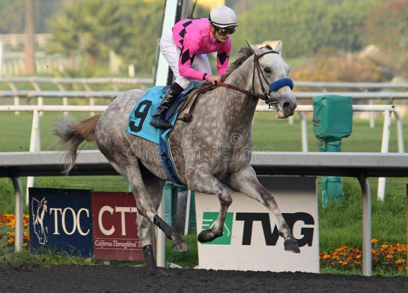 Tillbakablicken segrar hans första Race! royaltyfri foto
