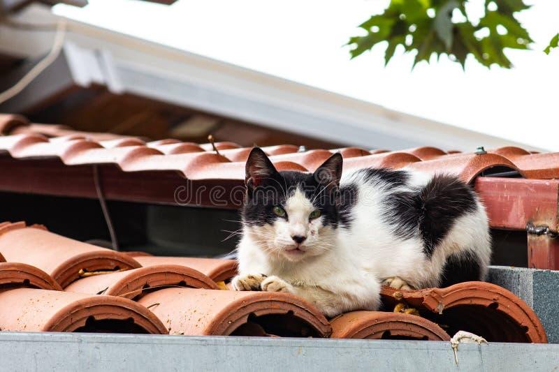 Tillfällig gatakatt på taket av huset royaltyfri bild