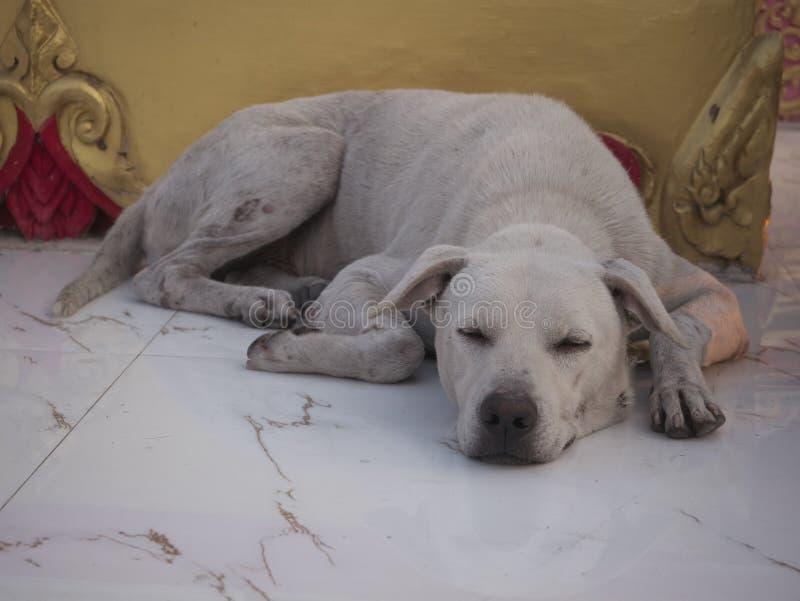 Tillfällig hund, hemlös hund som väntar något i en slagg royaltyfri fotografi
