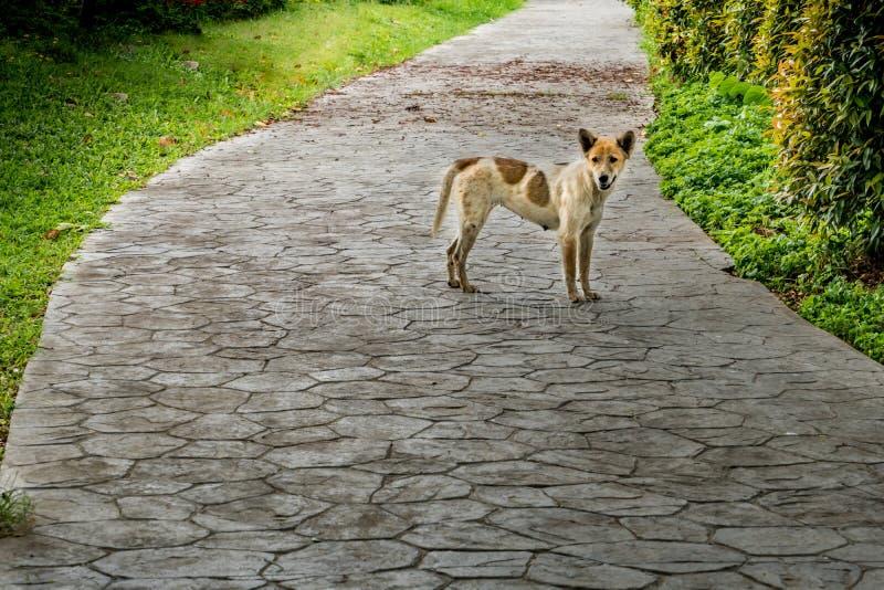 Tillfällig hund i parkera arkivbilder
