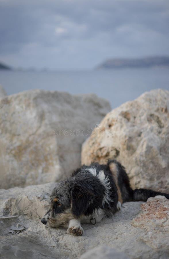 Tillfällig hund och havet royaltyfri foto