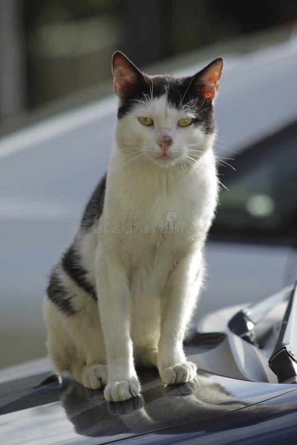 Tillfällig katt arkivbild