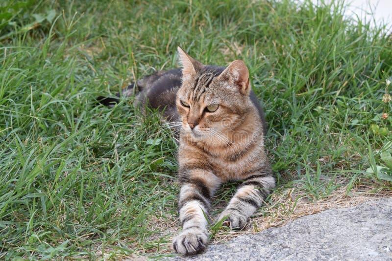 Tillfällig katt royaltyfri bild