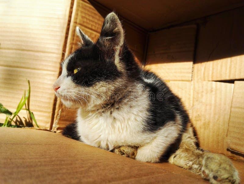 Tillfällig katt 4 för hemlös arkivfoto