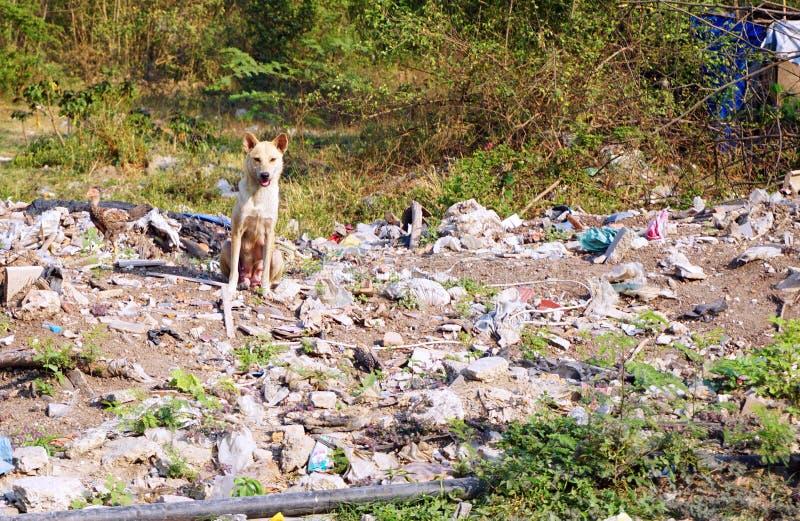 Tillfällig kvinnlig hund i fattigt område arkivbild