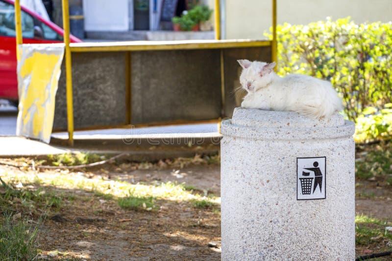 Tillfällig sårad och sjuk vit långhårig hankatt som ligger på en gatasoptunna arkivbild
