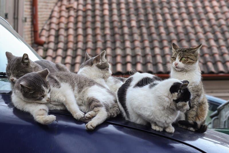 2019 tillfälliga Cat Photographer nya foto, gatakattfamilj sitter på bilen royaltyfri fotografi