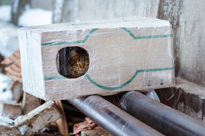 Tillfälliga djur i vintern, hemlöst kattsammanträde på en uppvärmningströmförsörjning, den hemlös fryste katten värme på rör, fol arkivfoton