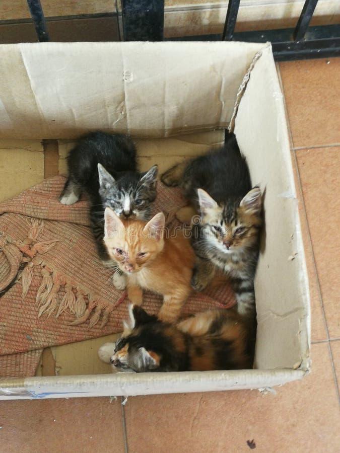Tillfälliga katter arkivbilder