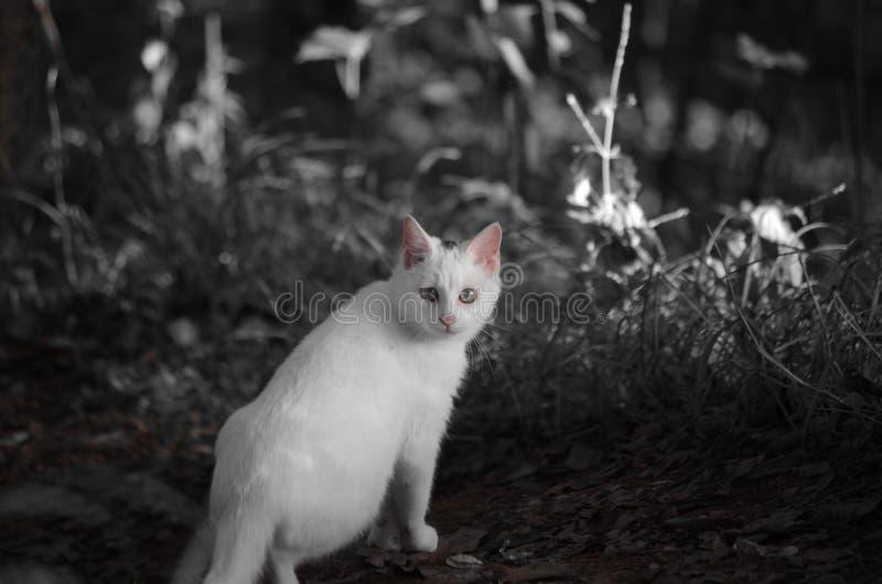 Tillfälliga katter vektor illustrationer